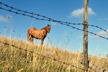 Cavallo solitario al pascolo