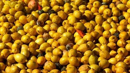 lemons rotten fruits