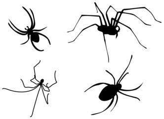 spiders vector set