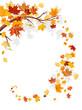 Maple leaves swirl