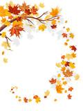 Fototapety Maple leaves swirl