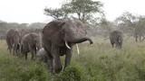 Fototapeta tanzania - dziki - Dziki Ssak