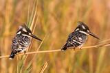 Fototapete Afrika - Schwarz - Vögel