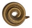 High angle view of Spinner Python, Royal python, ball python