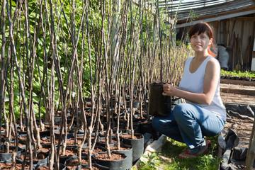 gardener with trees seedlings in pots