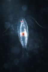 marine planktonic copepod