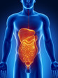 Abdominal organs anteriror view