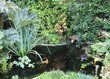 bassin de jardin et carpes koï - 35211373