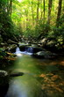 Lush green small waterfall stream