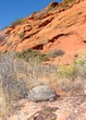Desert Tortoise, Gopherus agassizii, and red rock cliffs