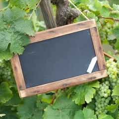 Tafel - Weinreben
