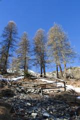 Site of St Simon's wood, park of Queyras, France