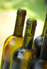 Bottles of wine - Bottiglie di vino