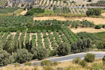 Aerial view of olive groves in Phaistos, Crete