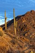 Desert Landscape of Saguaro National Park