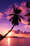 Paradise Scene Palm