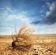 Desert - 35247979
