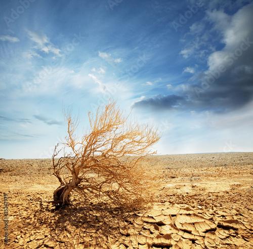 Poster Droogte Desert