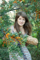 woman picking seabuckthorn