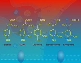 Biosynthesis of epinephrine