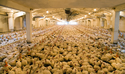 Integrated poultry farm