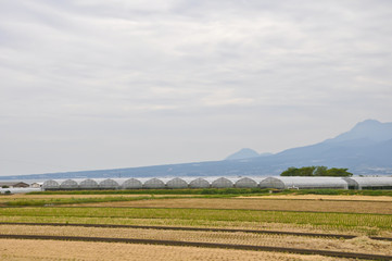 Asparagus farming at Isahaya, Japan