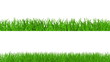 Growing green grass on white background, alpha included