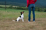 training the dog obedience poster