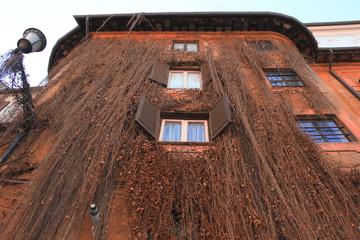 facciata casa rampicante