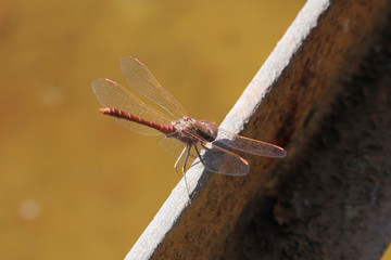 Dragonfly sit on metal beam