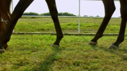 Horse feeding on grass outside stable