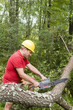 tree surgeon using chain saw fallen tree