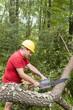 tree surgeon using chain saw fallen tree