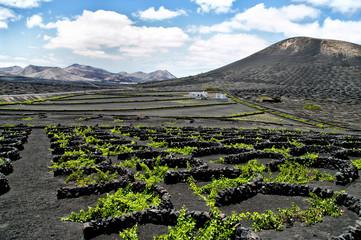 Vineyards in La Geria, Lanzarote, Spain.