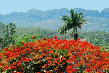 VinalesValley, Western Cuba