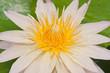 Close-up inside of beautiful pink lotus