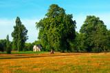 Kensington Garden at Autumn. poster