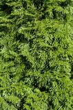 Fototapeta gałąź - jaskrawo - Drzewo
