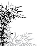 Fototapety Bamboo leaves in black and white colors for design
