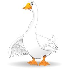 Oca Papero Fumetto-Goose Duck Cartoon-Vector