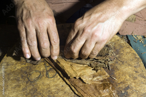 hand rolling tobacco leaves for cigar production