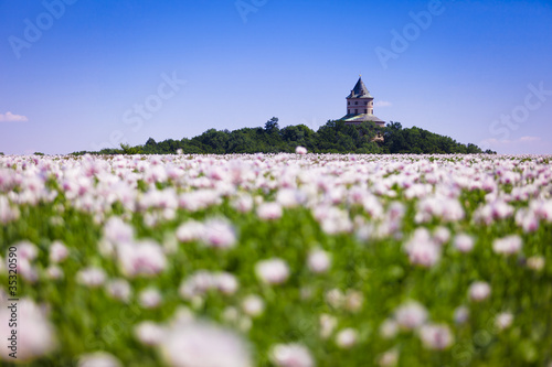Castle Humprecht (Czech Republic) and poppy field