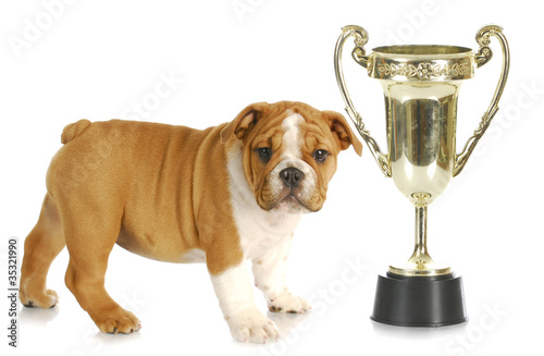 puppy with trophy