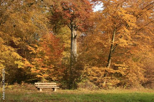 Fototapeten,herbst,wald,foliage,bank