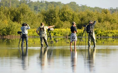 Group of photographers in water.