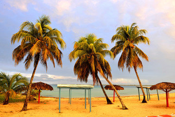 Palm trees on a beach.