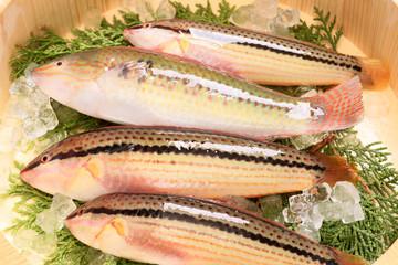 夏の魚(キュウセンベラ)