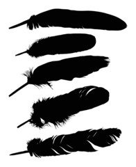 five black feathers collection