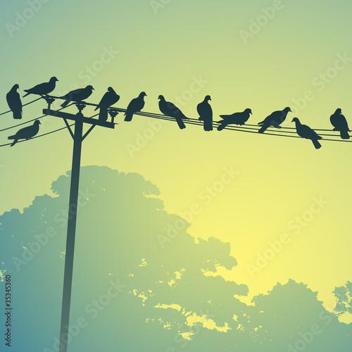 Obraz na płótnie Wiele ptaków na liniach telefonicznych