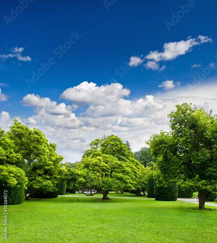 piekne-drzewa-parku-nad-blekitne-niebo-formalny-ogrod